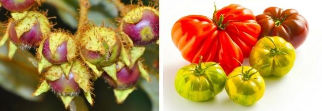 (6)kako-izgledale-nekoi-poznati-vidovi-hrana-pred-lugjeto-da-gi-kultiviraat-kafepauza.mk