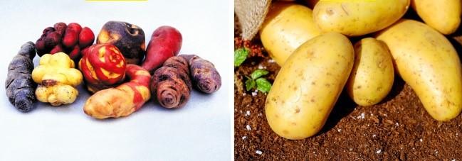 (8)kako-izgledale-nekoi-poznati-vidovi-hrana-pred-lugjeto-da-gi-kultiviraat-kafepauza.mk