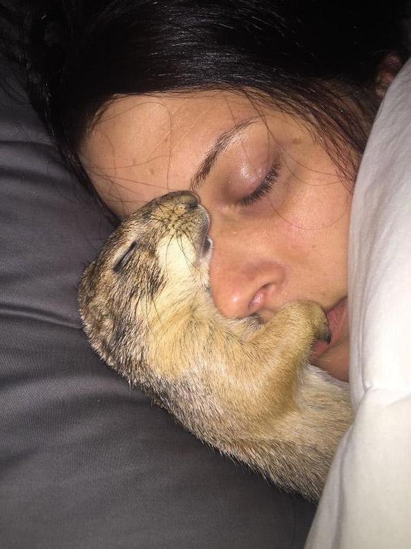 Домашни миленици кои без грижа на совест ги украле љубовните партнери на нивните сопственици