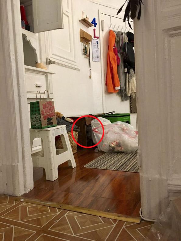 Нинџа мачка: Обидете се да го најдете слаткиот натрапник на овие фотографии