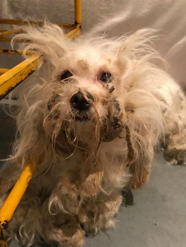 Погледнете го ова улично куче кое не престанало да се смее по неговата неверојатна трансформација