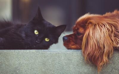 Исцелител или ангел чувар: Кое е духовното значење на чувањето мачка и куче?