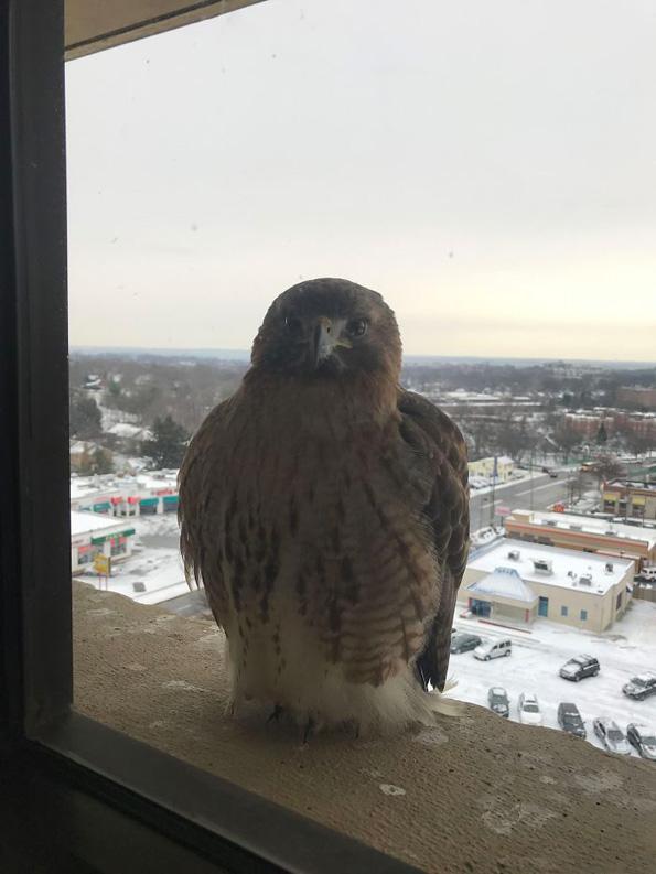 Луѓе споделуваат фотографии од необичните пријателчиња што ги посетуваат нивните прозорци