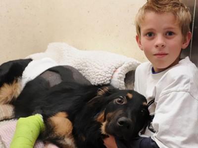 Вистински приказни за херојските подвизи на најхрабрите кучиња во светот
