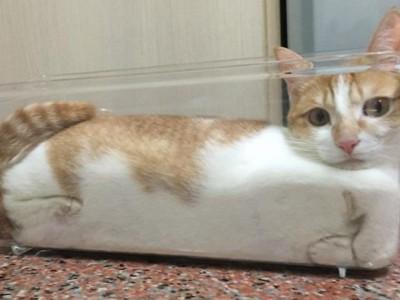 Урнебесни фотографии и гифови кои ќе ви докажат дека мачките се течни
