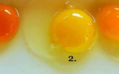 Одберете го јајцето што мислите дека потекнува од здрава кокошка и дознајте како се храните