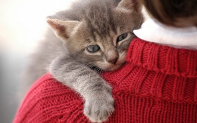 12 начини на кои мачките искажуваат љубов, а вие не сте свесни за тоа