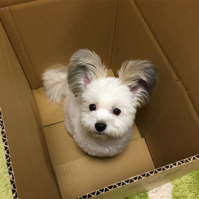 Неодоливо кученце со уши како на Мики Маус
