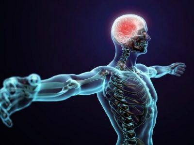 Половина од нашето тело воопшто не е човечко