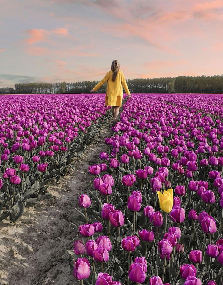 Неверојатни пејсажи од лалињата во Холандија