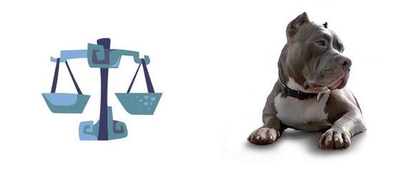 Која раса на куче најмногу му одговара на вашиот хороскопски знак?