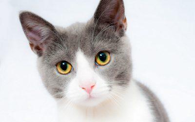 8 трикови како да се зближите со вашата нова мачка