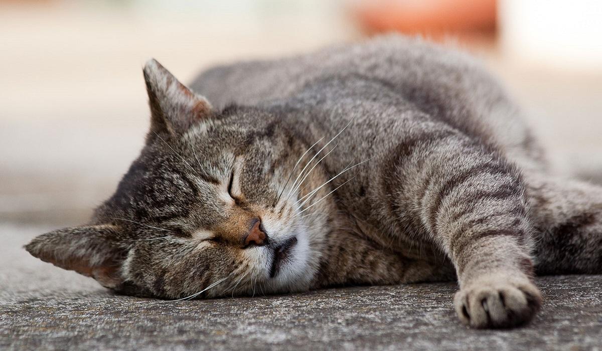 Како да дознаете дали ѝ недостигате на вашата мачка кога не сте дома?