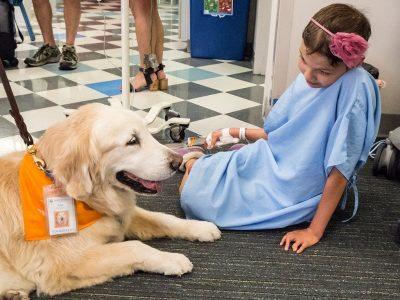 Кучињата-терапевти се чудесни, но дали ја сакаат својата работа?