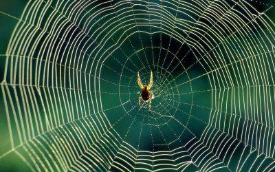 Зошто не треба да ги убивате пајаците во вашиот дом?