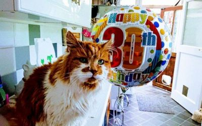 Можеби најстариот мачор во Англија го прославил својот 30-ти роденден
