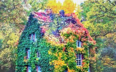 Неверојатни фотографии од растенија кои ги претвориле домовите во бајка