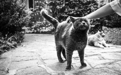 Неверојатни фотографии од среќни мачки