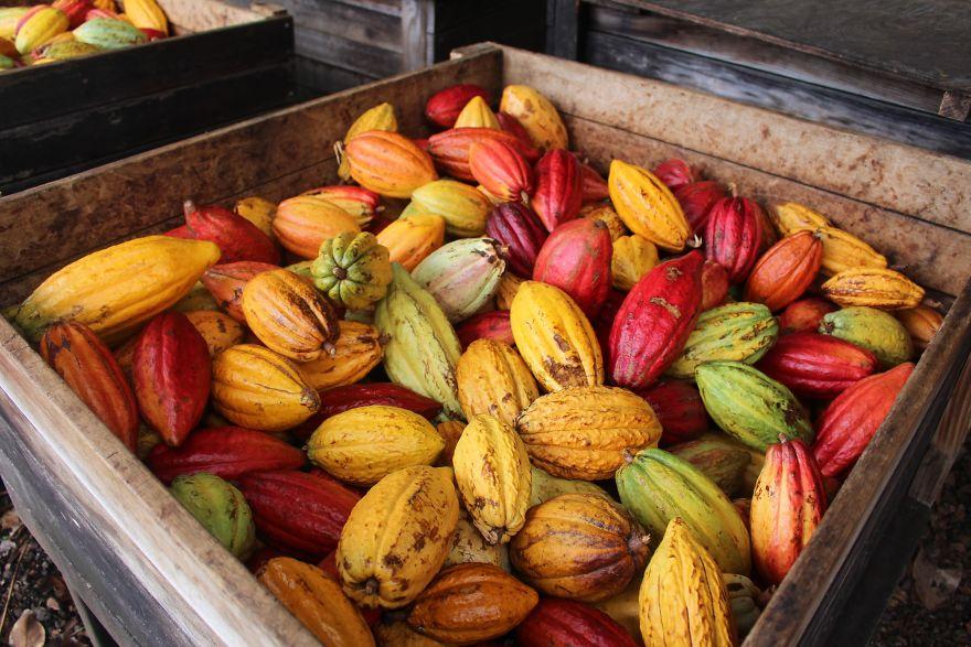 Како изгледа производството на чоколадо?