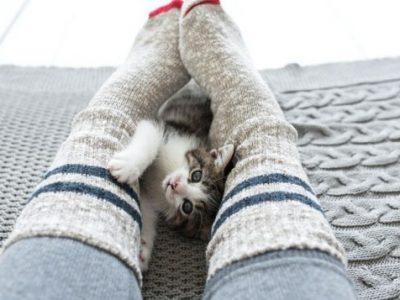 Дали мачките навистина го намалуваат стресот?