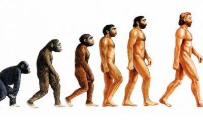 Ново истражување ја предизвикува теоријата за еволуција на Дарвин