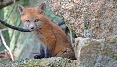 10 популарни видео-стримови од диви животни коишто можете да ги гледате 24/7