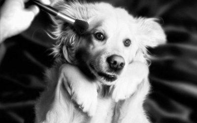 Најпознатите фотографии на Мадона рекреирани со куче
