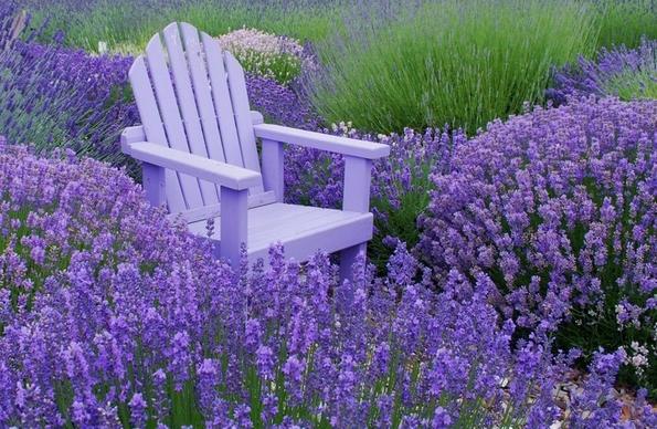 8 билки коишто со сигурност ќе ги избркаат комарците од вашиот дом