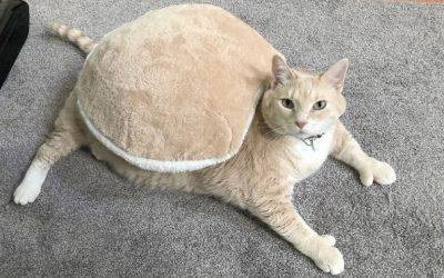 Запознајте го Бронсон, огромното маче од 15 килограми