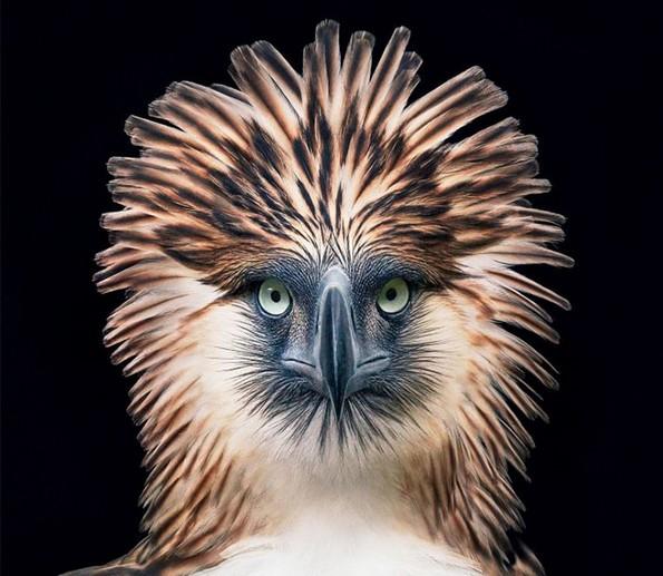 Фотограф поминал 2 години фотографирајќи животни на кои им се заканува истребување