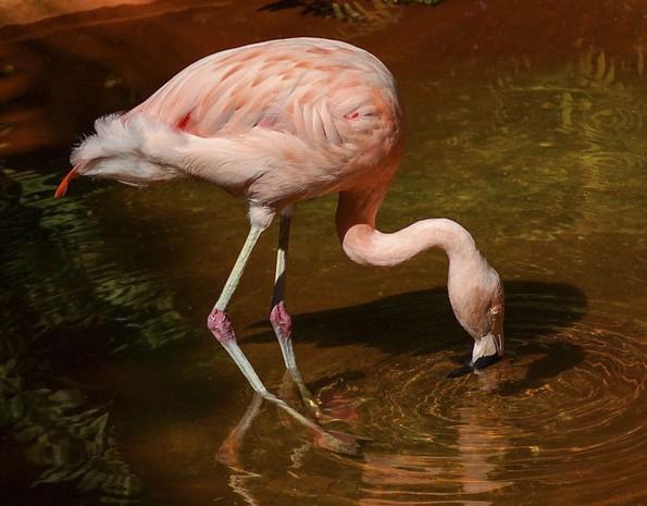 Негувателка во зоолошка споделува интересни факти за животните