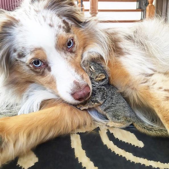 Невообичаени пријателства помеѓу животни, коишто ќе ви го стоплат срцето