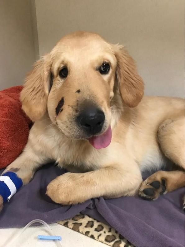 Неверојатна приказна: куче херојски ѝ го спасило животот на својата сопственичка срипувајќи пред отровна змија
