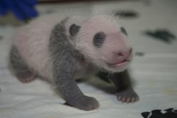 Фотографии од слатки бебиња животни што ќе ви го стопат срцето