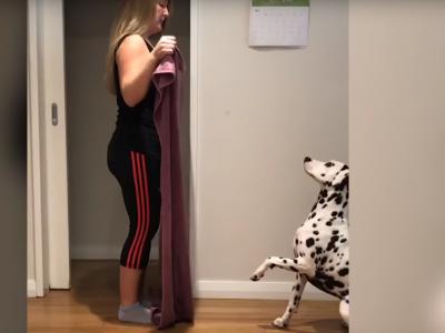 Кучиња реагираат на магичниот трик со ќебе