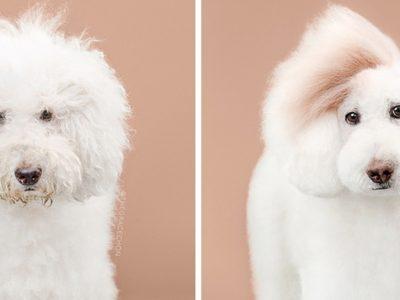 15 симпатично стилизирани кученца кои ќе ве натераат да посакате да чувате барем едно