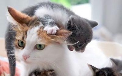 29 совршени примери со животни коишто покажуваат што значи да се биде мајка