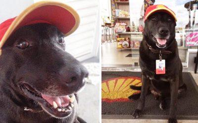 Куче било напуштено на бензинска станица, а сега е симпатичен работник со полно работно време