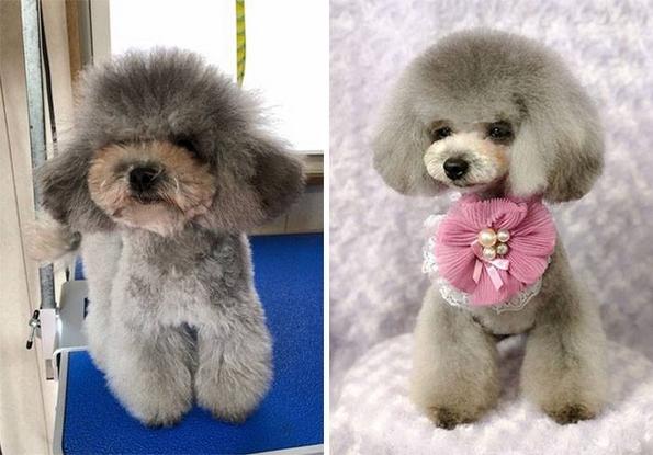 Симпатично стилизирани кученца кои ќе ве натераат да посакате да чувате барем едно