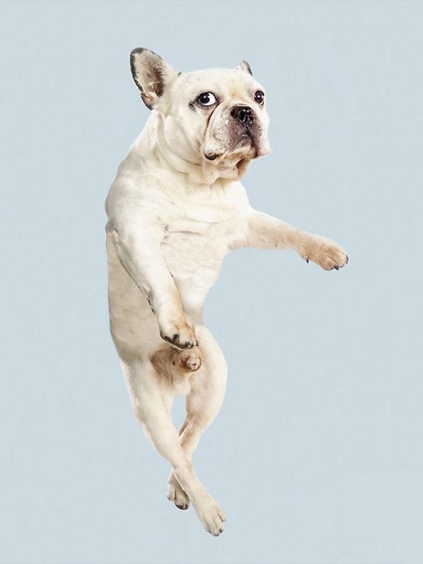 Забавни портрети од летачки кучиња
