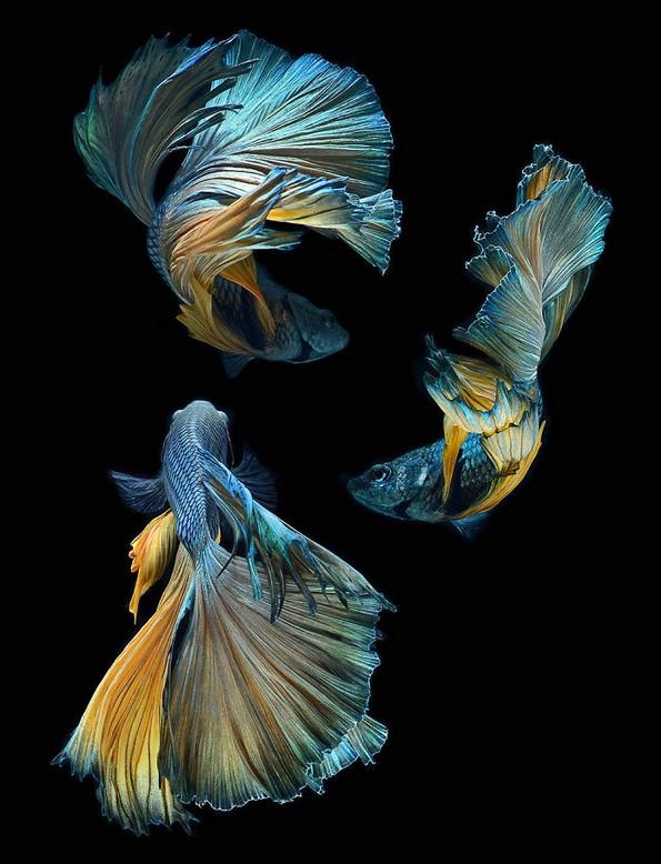 Фотограф прави фотографии од риби како никој досега