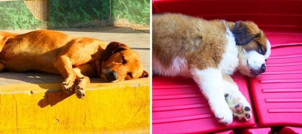 Што може да ви каже положбата на спиење на вашето куче?