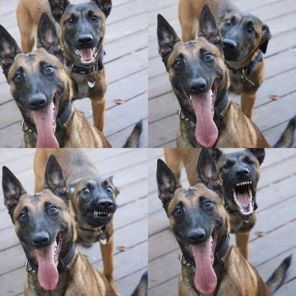 Фотографии oд животни направени во вистинскиот момент што ќе ви го разубават денот