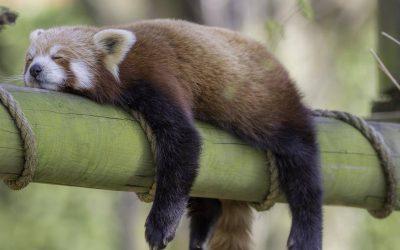 Истражување: Да бидете мрзливи е подобар начин да живеете подолго
