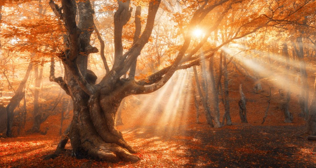 3 интересни митови за есенската рамноденица кои сигурно сте ги помешале со факти