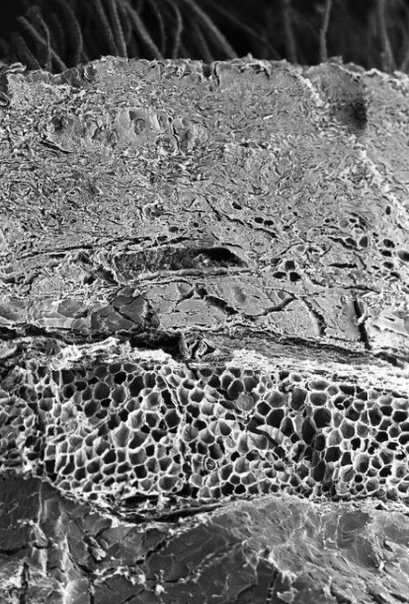 Како изгледаат органите и процесите во нашето тело под микроскоп?