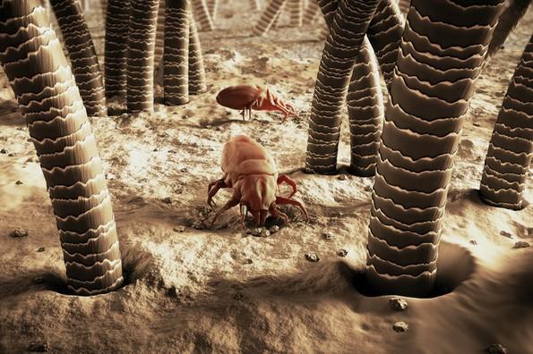 Како да се ослободите од инсектите во вашиот дом?