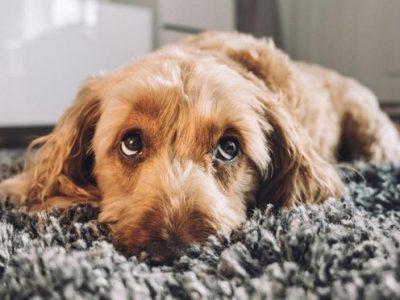 11 знаци дека вашето куче навистина ве сака