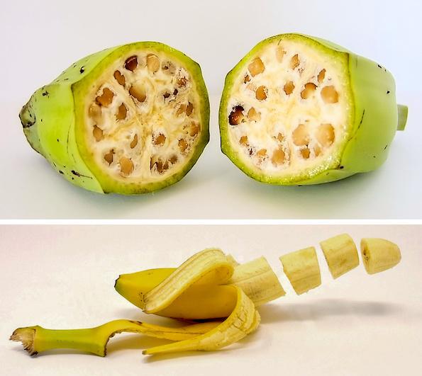 Како изгледале овошјето и зеленчукот во минатото? Бананата сосема ќе ве изненади! (банана некогаш и денес)