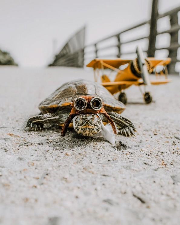 Запознајте ги Сквиши и Рози, желките што го освоија Инстаграм